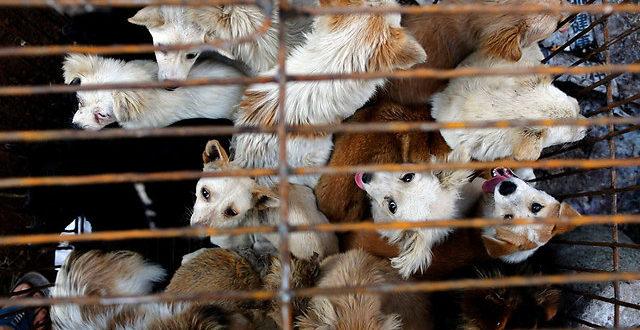 שנזן הפכה לעיר הראשונה בסין האוסרת על אכילת כלבים וחתולים